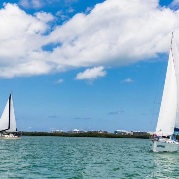 Regatta In Miami